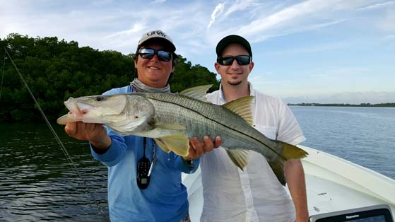Lemon Bay snook fishing