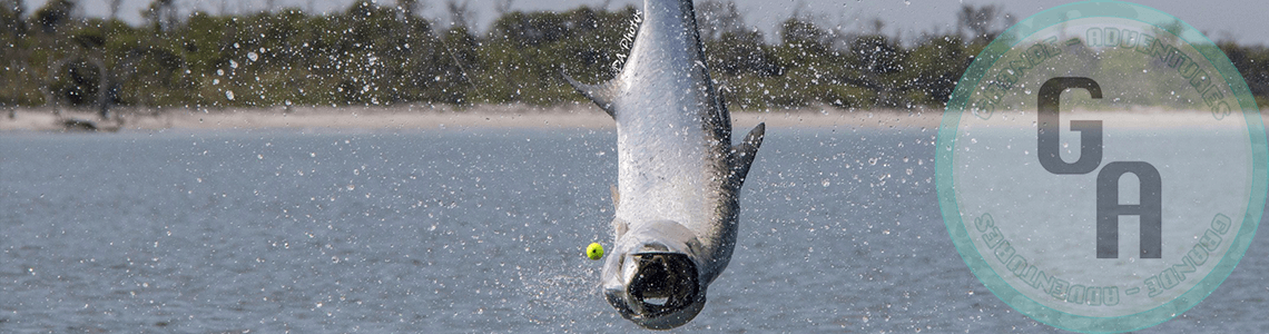 Boca Grande tarpon jumping out of the water